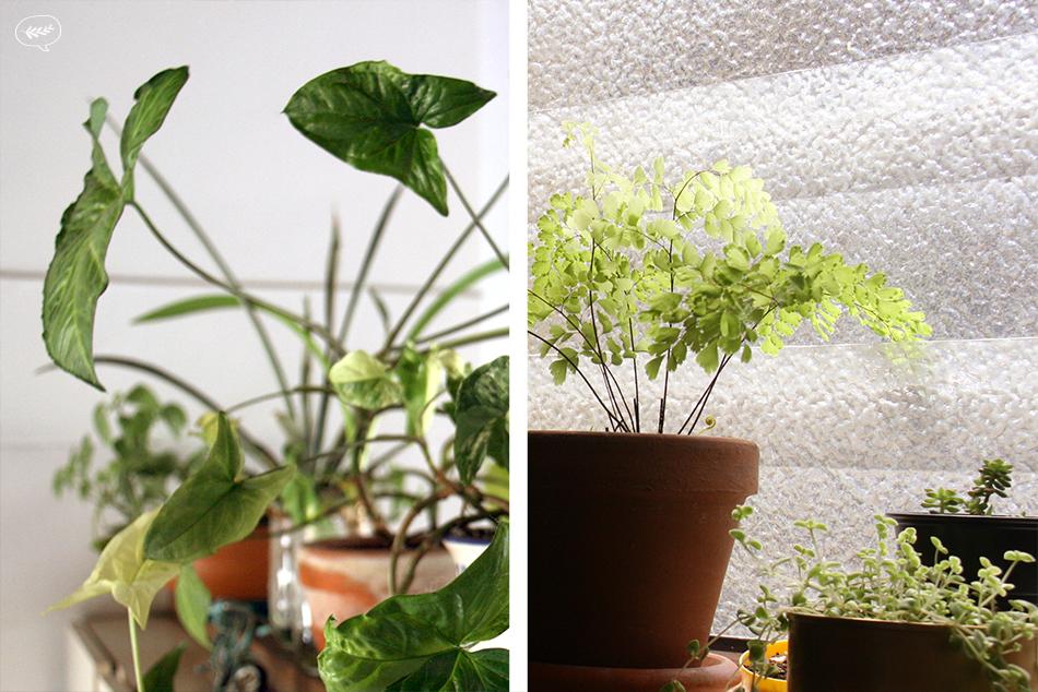 Las plantas son buena compañía