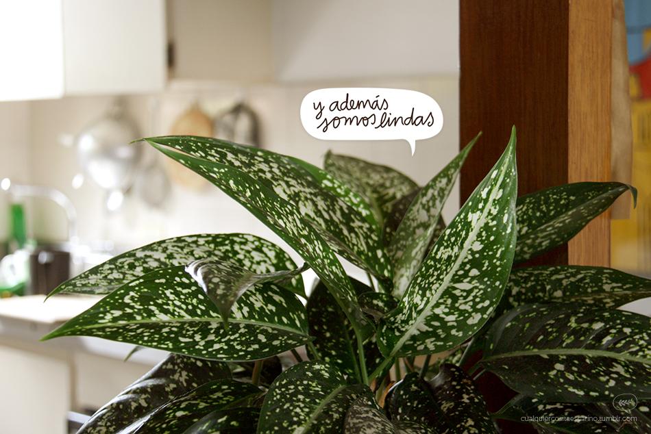 Las plantas fabrican oxígeno