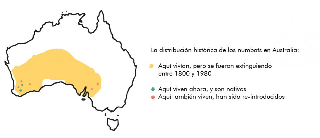 Distribución histórica numbat