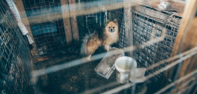 Las condiciones de las fábricas de cachorros