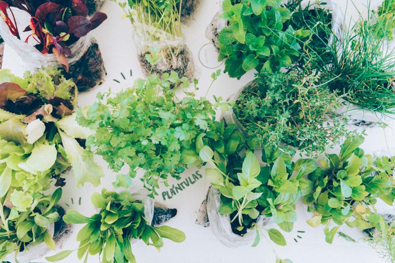 Plántulas, antes de sembrar