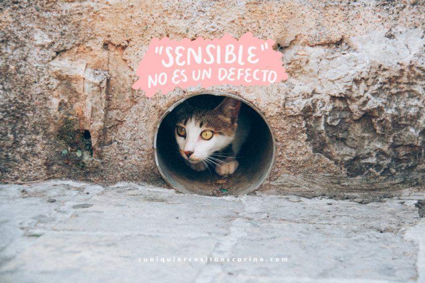"""""""Sensible"""" no es un defecto · Cualquier cosita es cariño"""