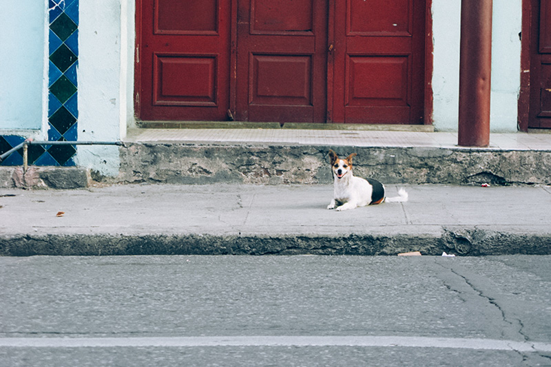 Animales de paseo - Un blog que me gustaría volver a tener