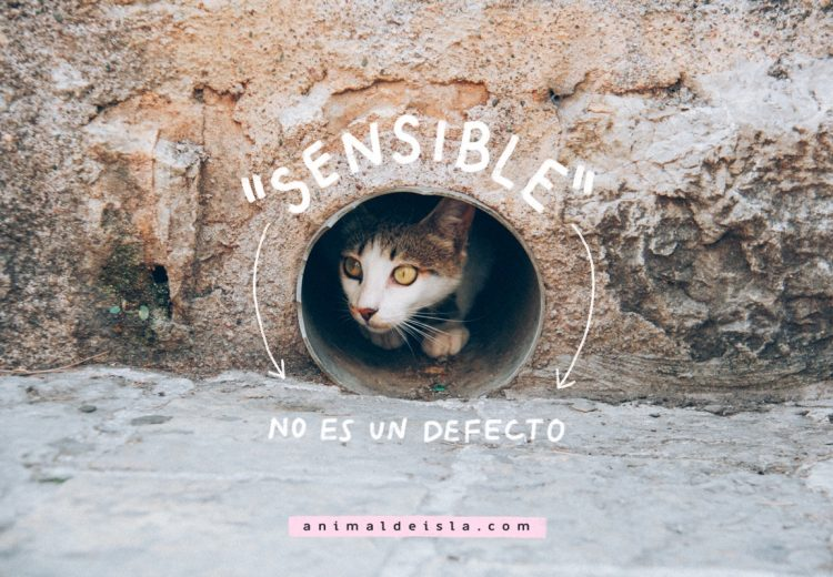 """""""Sensible"""" no es un defecto"""