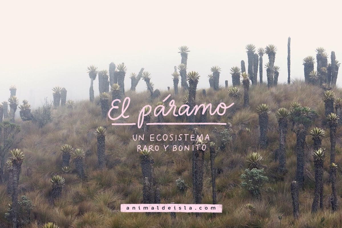 El páramo: un ecosistema raro y bonito